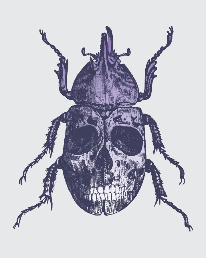 """""""Escarabajo"""". Jorge Matías Garnica"""